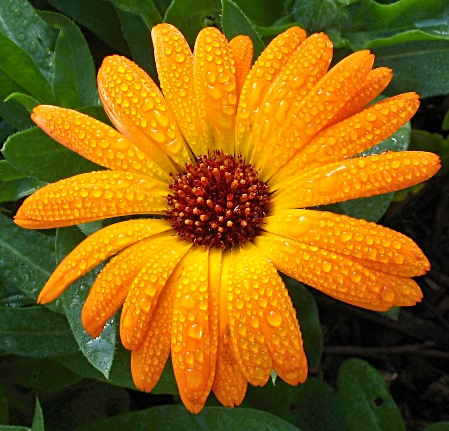 Marigolds are often strung
